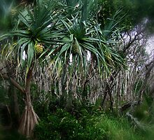 """""""Beach Trees"""" by debsphotos"""