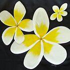 Yellow Frangipani's by Sooty6