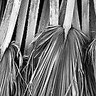 Palm Leaves by CarolM