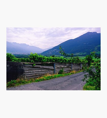 Valley of Vineyards Photographic Print