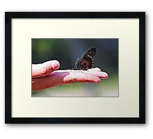 BUTTERFLY ON HAND Framed Print