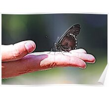 BUTTERFLY ON HAND Poster