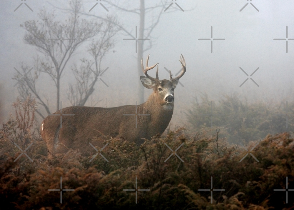 Buck in fog - White-tailed Deer by Jim Cumming