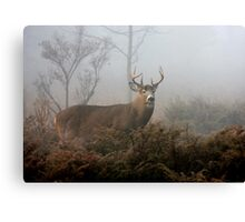 Buck in fog - White-tailed Deer Canvas Print
