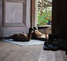 Ducks on the doorstep by annamorocco
