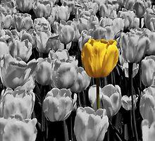 Alone in a crowd by PhotosByHealy