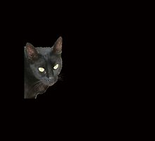 Black Cat Isolated on Black Background by taiche