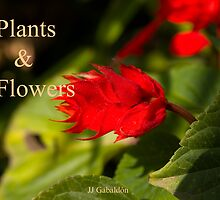 Plants & Flowers by juan jose Gabaldon