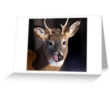 Young Whitetail Buck  Greeting Card