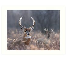 White-tailed Deer In The Brush Art Print