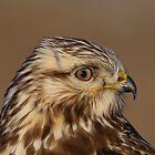Rough-legged Hawk Portrait by hard-rain