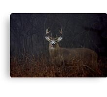 Morning Buck - White-tailed Deer Canvas Print