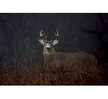 Morning Buck - White-tailed Deer Photographic Print