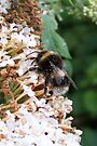 Bee 2 by LoneAngel