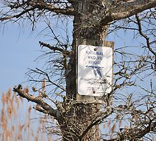 A Back Bay NWR Sign in a Cypress Tree by meinvb