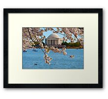 Cherry Blossoms at the Jefferson Framed Print