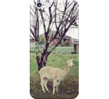 alpaca family iPhone Case/Skin
