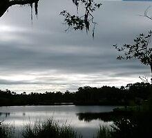 Frances Park, New Port Richey, FL by Ellen Turner