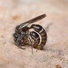 Mating Wasps by Andrew Trevor-Jones