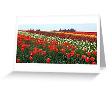 Forever Tulips Greeting Card
