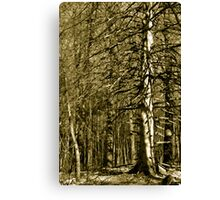 Even in Starkness There is Beauty Canvas Print