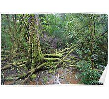 tasmanian forest Poster