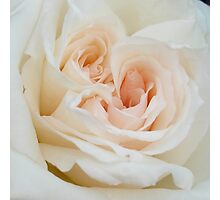 Close Up View Of A Romantic White Wedding Rose Photographic Print