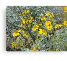 Flowering Desert in Scottsdale Canvas Print