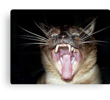 Attack of the Psycho Siamese Canvas Print
