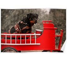 Rottweiler carting 2009 Poster
