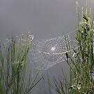 Spider's Web by David Clarke