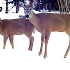 """Mamma Deer and Fawn, """"what's she doing, mamma?"""" by MaeBelle"""