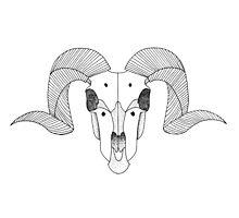 Ram Skull Photographic Print