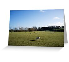 Sheep in a Field Greeting Card