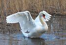 Wetland Swan by SWEEPER