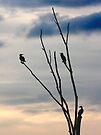 Cormorant tree . by SWEEPER