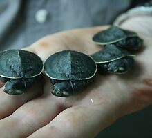 Baby Short Necked Turtles by three-wizards