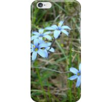 Blue-eyed Grass iPhone Case/Skin