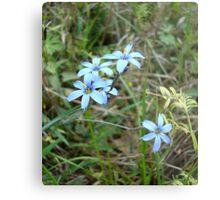 Blue-eyed Grass Metal Print