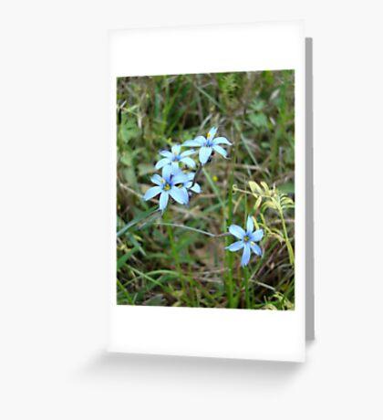 Blue-eyed Grass Greeting Card