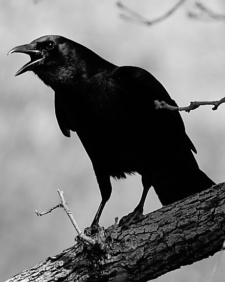 Calling All Crows by Samantha Dean
