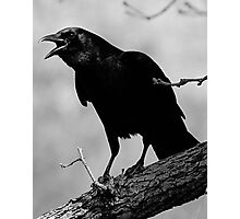 Calling All Crows Photographic Print