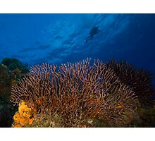 Over the Reef Photographic Print