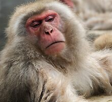 Old Man Monkey by Skye Hohmann