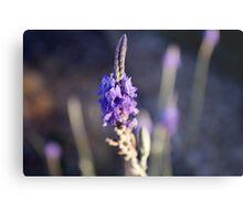 Luscious Lavender Metal Print