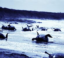 The Whales/ Naracoopa Beached Whale Rescue Series 4 by oddoutlet