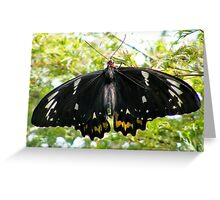 another butterfly Greeting Card