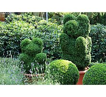 topiary green bear Photographic Print