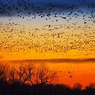 Swarm Setting – Sandhills over The Platte by Owed to Nature
