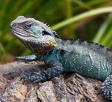 Dragon by Adam Spence